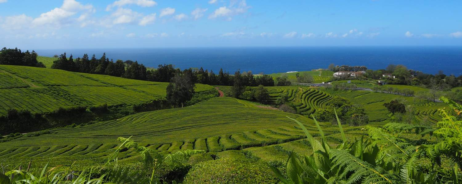 Hiking tours azores